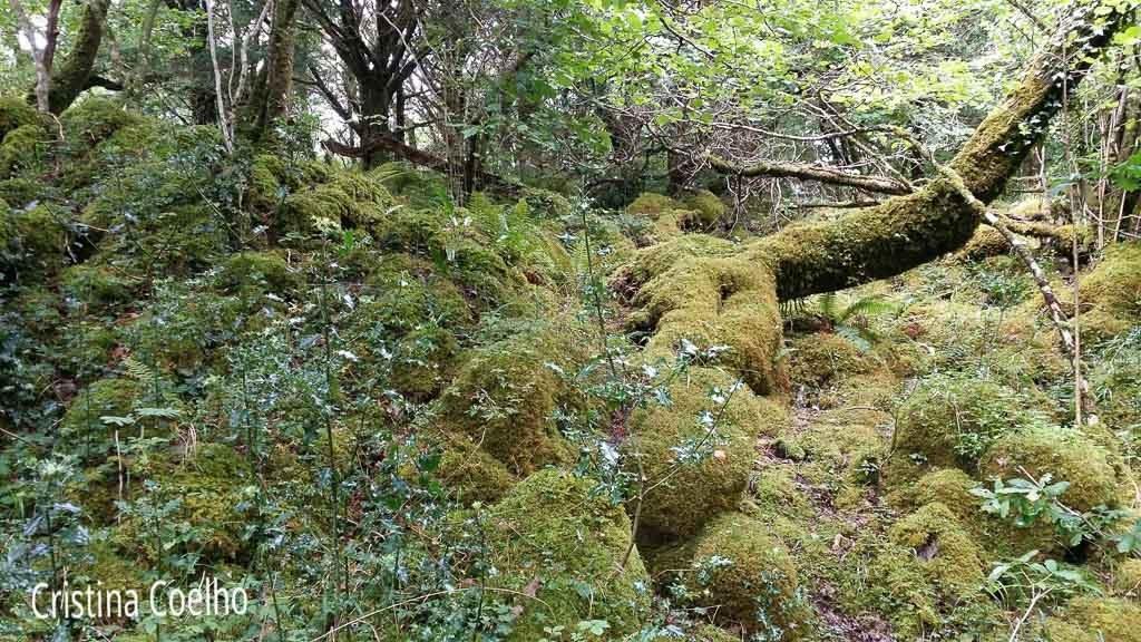 Rodeando o Lago Muckross no meio das pedras e árvores cobertas de musgos