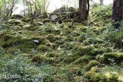Rodeando o Lago Muckross ou Midle Lake por entre a vegetação - tufos de musgo e hera que cobrem pedras e raizes de árvores