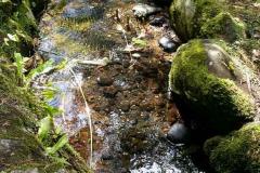 Jardins de Muckross