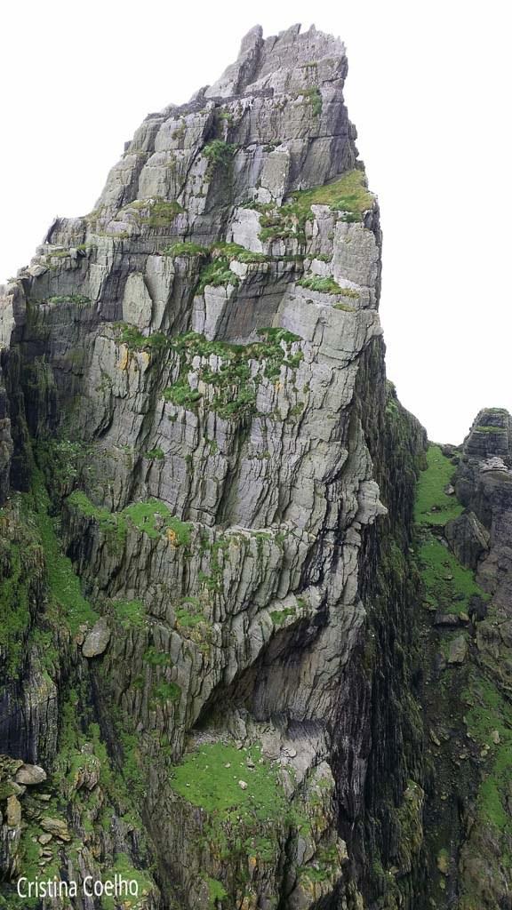 Nesting Cliff - Skellig Michael