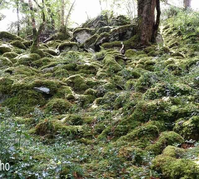 Irlanda, Kerry, Killarney, Killarney Natural Park IR, Parques